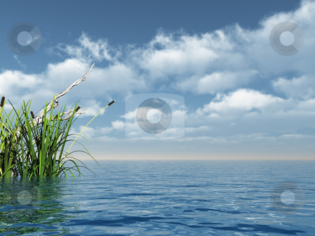 Reed stock photo, Water landscape and reed - 3d illustration by J?