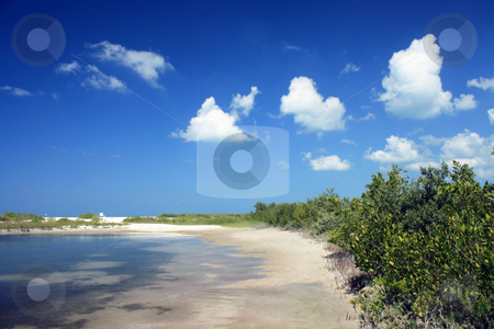 Beach at Marco Island stock photo, Small beach surrounded by mangroves on Marco Island, located on the west coast of Florida in the Gulf of Mexico. Place known for its tourist attractions. by Carlos Melillo