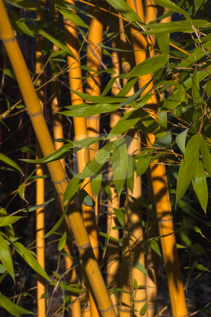 Bamboo with Green Leaves stock photo, Bamboo with green leaves by William Perry