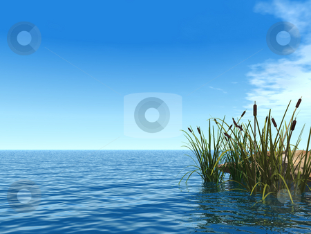 Reet stock photo, Water landscape and reed - 3d illustration by J?