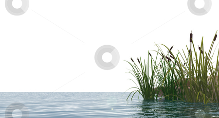 Reed stock photo, Isolated water landscape and reed - 3d illustration by J?