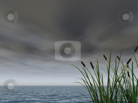 Dark sky stock photo, Water landscape and reed - 3d illustration by J?