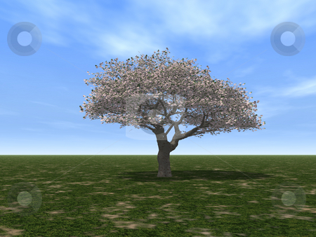 Tree stock photo, A tree on a green field and blue sky - 3d illustration by J?