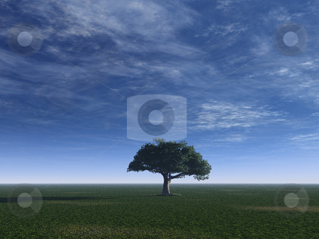 Tree stock photo, Lonely tree on a green field and cloudy blue sky - 3d illustration by J?