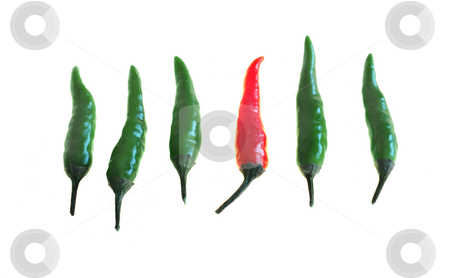 Which one is the hot one? stock photo, Red and green hot chili pepers (Capsicum) isolated on white by Alexandru Cristian Ciobanu