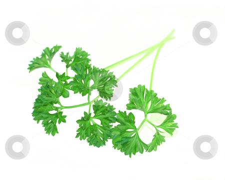 Fresh parsley isolated on white stock photo, Fresh parsley isolated on white background by Alexandru Cristian Ciobanu