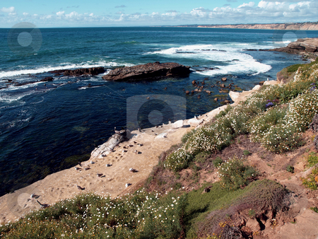 Floral hillside overlooking ocean and beach with b irds stock photo, Scenic panorama of flowering hillside overlooking the pacific ocean and birds on the beach by Jill Reid