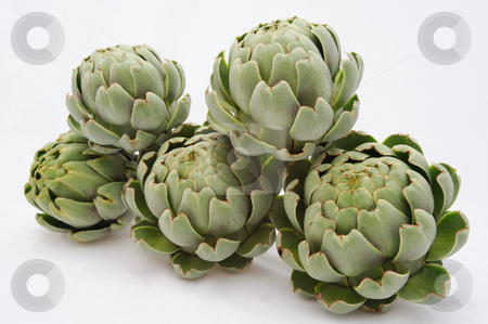 Artichoke stock photo, Five globe artichokes with leaves partially opened on a light colored background. by Lynn Bendickson