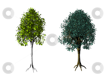 Trees stock photo, Two iolated trees on white background - 3d illustration by J?