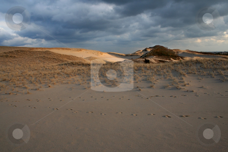 Cape Cod Footprints in Sand Dunes National Seashore Provincetown stock photo, Cape Cod Foodprints in Sand Dunes National Seashore Provincetown, Massachusetts by William Perry