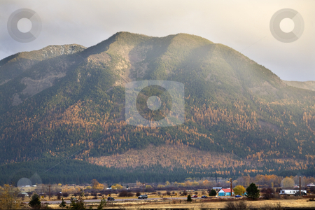 Farm Yellow Tamarack Trees On Large Hill Fall Colors and Wheat M stock photo, Farm Hills with Yellow Tamarack Trees Fall Colors Large Mountain Missoula Montana by William Perry