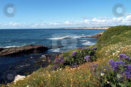 Spring flowers on a pacific coast hillside stock photo, Panoramic view of spring flowers on a pacific coastal hillside by Jill Reid