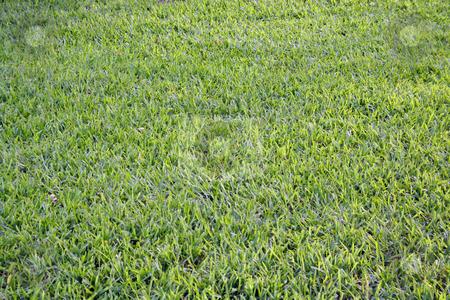 Green Grass stock photo, Fresh cut green grass. by Brandon Seidel
