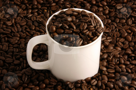 Coffee Beans in a White Coffee Cup stock photo, Coffee beans in a white coffee cup and all around it by Brandon Seidel