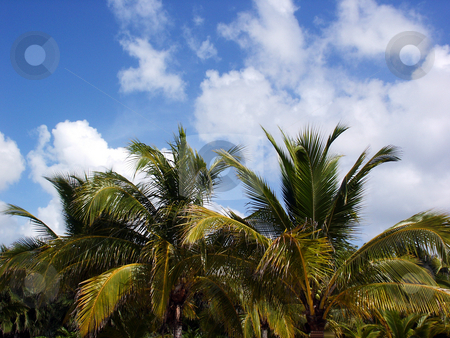 Tropical Sky stock photo, Tree line on a beach in Cancun Mexico. by Brandon Seidel