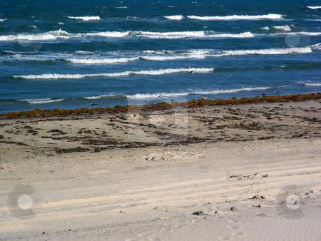 Beachfront stock photo, Unmaintained but pretty beachfront property by Brandon Seidel