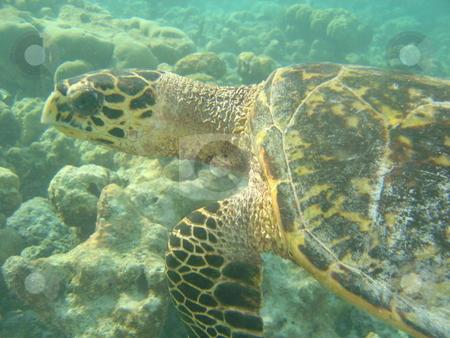 Turtle stock photo,  by Jack Richardson