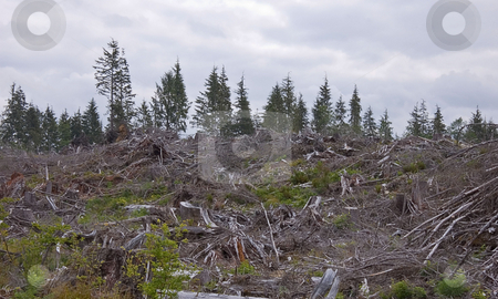 Clear Cut Forest stock photo, This photo is a clear cut area of a forest to show after affects on the environment after a fresh harvest. by Valerie Garner