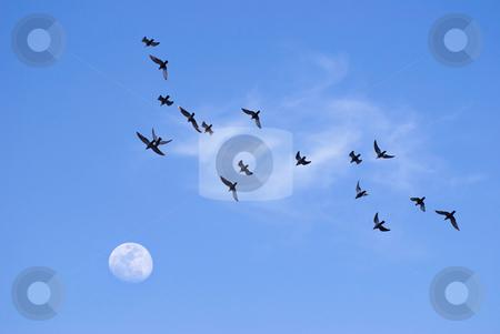 Birds flying toward the moon stock photo, Birds flying toward the moon in the evening by Lawren
