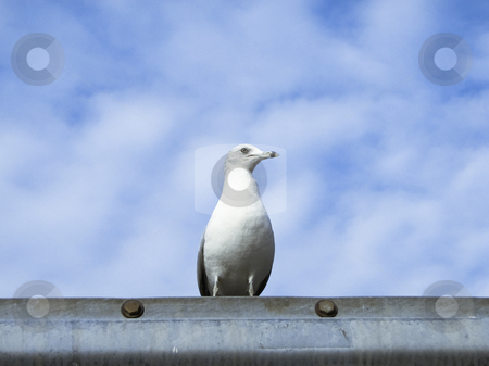Seagull on ledge stock photo, Profile view of a seagull on a railing by Annette Davis