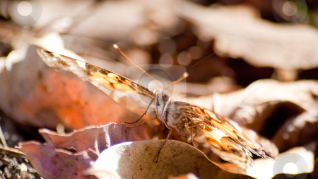 Fall Butterfly stock photo,  by Robert Norsworthy