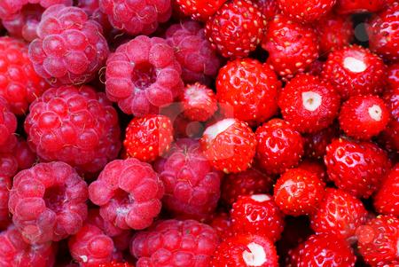 Raspberries and wild strawberry stock photo, Red raspberries and wild strawberry as background by Jolanta Dabrowska