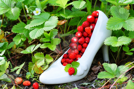 Wild strawberry stock photo, Wild strawberry stand in shoe porcelain  on soil by Jolanta Dabrowska