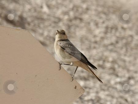 Sparrow stock photo, Sparrow sitting on an sign by Thomas K?