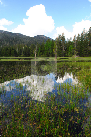 Calm Glassy Water stock photo, Sky and cloud reflections in the calm water of a california meadow in the sierra nevada mountains. by Lynn Bendickson