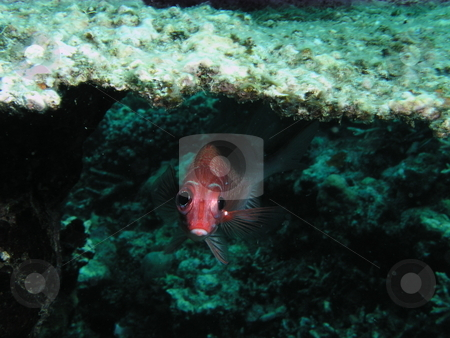 Underwater stock photo,  by Ryan Dandy