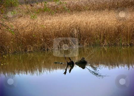 Dniper River, Kiev, Ukraine stock photo, Dniper River, Kieve, Ukraine by William Perry