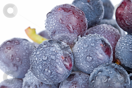 Grapes with drops, fruit. stock photo, Fresh grapes with drops, delicious fruit. by Lawren
