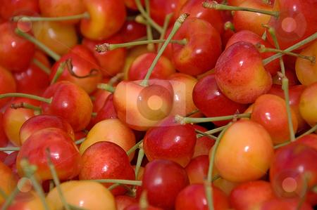Lots of Rainier Cherries stock photo, This shot shows many bright yellow and red Rainier cherries. by Valerie Garner