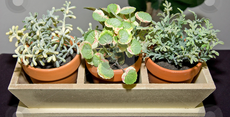 Row of Three Clay Potted Plants stock photo, This is a planter holder with three clay potted plants, by Valerie Garner