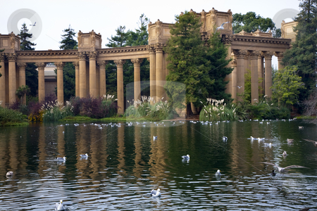 Seagulls Water Reflections Palace of Fine Arts Museum San Franci stock photo, Grecian Columns Seagulls Water Reflections Palace of Fine Arts Museum San Francisco California  Created in 1915 for Pan Pacific Exhibition. by William Perry