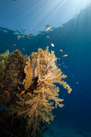 Coral Reef in the early morning light stock photo, Coral Reef in the early morning light. Red Sea, Eygpt. by Mark Doherty