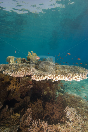 Coral Reef stock photo, Coral Reef in the early morning light. Red Sea, Eygpt. by Mark Doherty