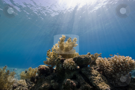 A Natural light shot of a coral reef stock photo, A Natural light shot of a coral reef with sunrays in the background. by Mark Doherty