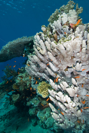 A heatlhy coral reef stock photo, A heatlhy coral reef. Red Sea, Egypt. by Mark Doherty