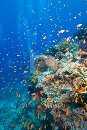 Colorful tropical reef, Red Sea, Egypt stock photo, Colorful tropical reef, Red Sea, Egypt by Mark Doherty