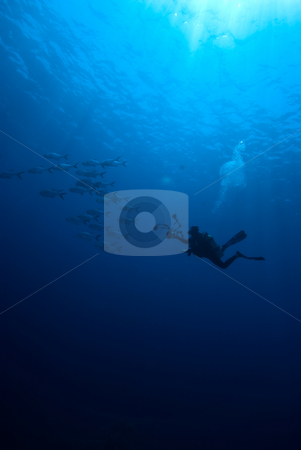 An underwater photographer stock photo, An underwater photographer an a small school of fish by Mark Doherty
