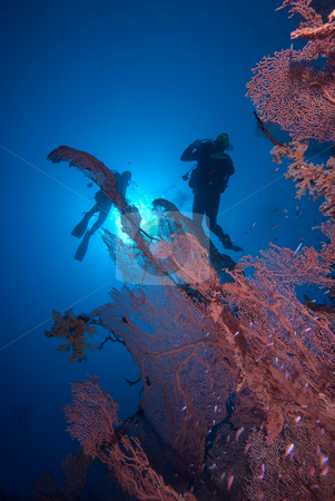 Silhouetted divers above a Giant sea fan stock photo, Silhouetted divers above a Giant sea fan. Red Sea, Egypt. by Mark Doherty