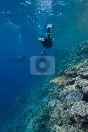Divers swimming along the shallows of a coral reef stock photo, Divers swimming along the shallows of a coral reef. Red Sea, Egypt. by Mark Doherty