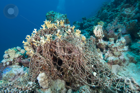 An old discarded fishing net over the coral reef. stock photo, An old discarded fishing net over the coral reef. Red Sea, Egypt. by Mark Doherty