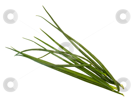 Onion  stock photo, Isolated green bunch-onion at the white background by Sergej Razvodovskij