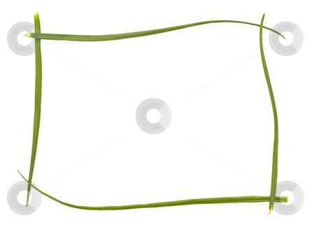 Onion  stock photo, Green bunch-onion frame against white background by Sergej Razvodovskij
