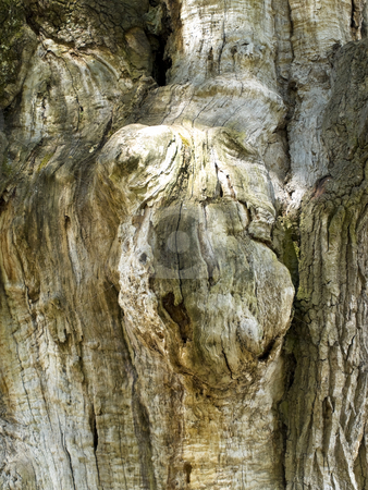 Trunk stock photo, Photo of the old wood trunk by Sergej Razvodovskij