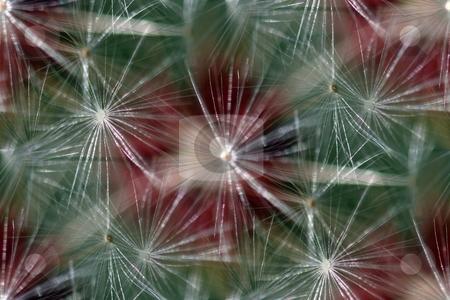 Seamless Background Dandelion stock photo, Seamless background or wallpeper with a dandelion. by Henrik Lehnerer