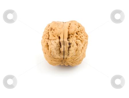 Nut,walnut stock photo, Nut,walnut on the white background by Vladyslav Danilin
