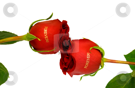 Red roses forever stock photo, Kiss red roses